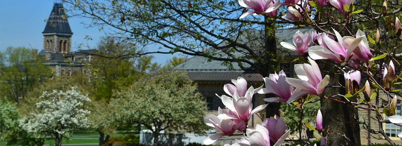 Cornell Arts Quad in spring
